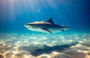 shark on sand