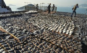 sharkfins