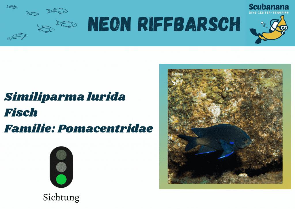 Neon Riffbarsch
